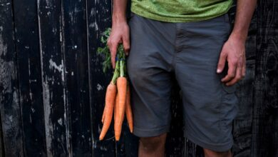 Photo of Are Carrots Beneficial in Male Fertility Treatment Naturally?