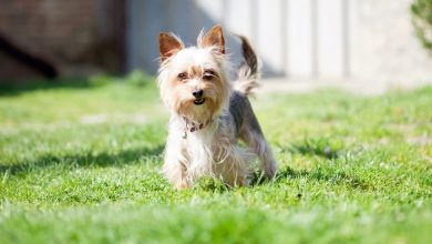 Photo of Leaving Your Dog Outside: Some Important Tips To Keep In Mind