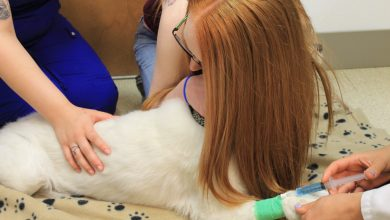 Photo of Euthanasia: How Do I Know if the Time Is Right for My Pet?